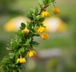 Flora Nativa en Torres del Paine