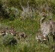 Fauna Nativa en Torres del Paine