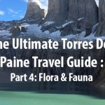 (English) The Ultimate Torres Del Paine Travel Guide – Part 4: Flora & Fauna