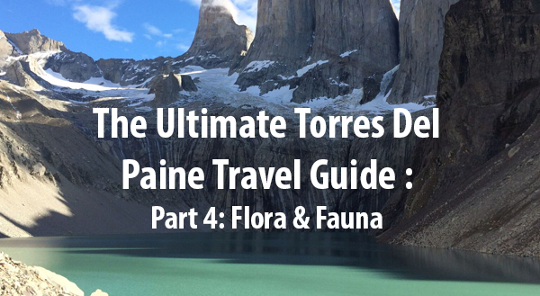 (Español) (English) The Ultimate Torres Del Paine Travel Guide – Part 4: Flora & Fauna